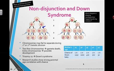 Non-disjunction and Down Syndrome (2016) IB Biology - YouTube