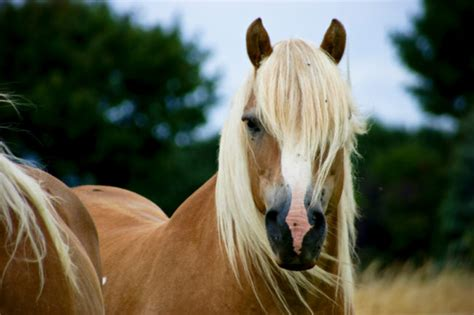 13 Beautiful Horse Breeds You Didn't Know Existed Before Today