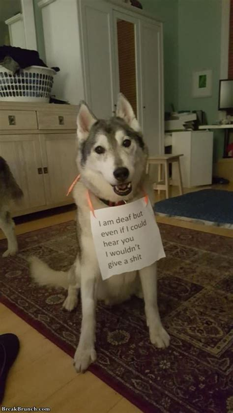 Another round of funny pet shaming - BreakBrunch