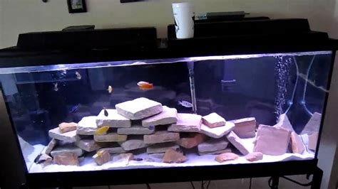 How To: Malawi Cichlid/Peacock Tank - YouTube